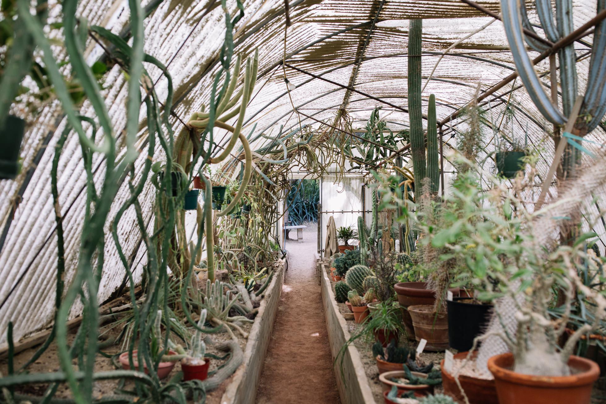 0021-palm-springs-moorten-botanical-gardens-greenhouse-wedding-ca