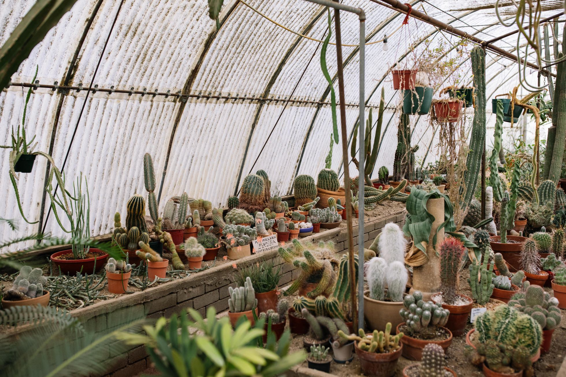 0022-palm-springs-moorten-botanical-gardens-greenhouse-wedding-ca
