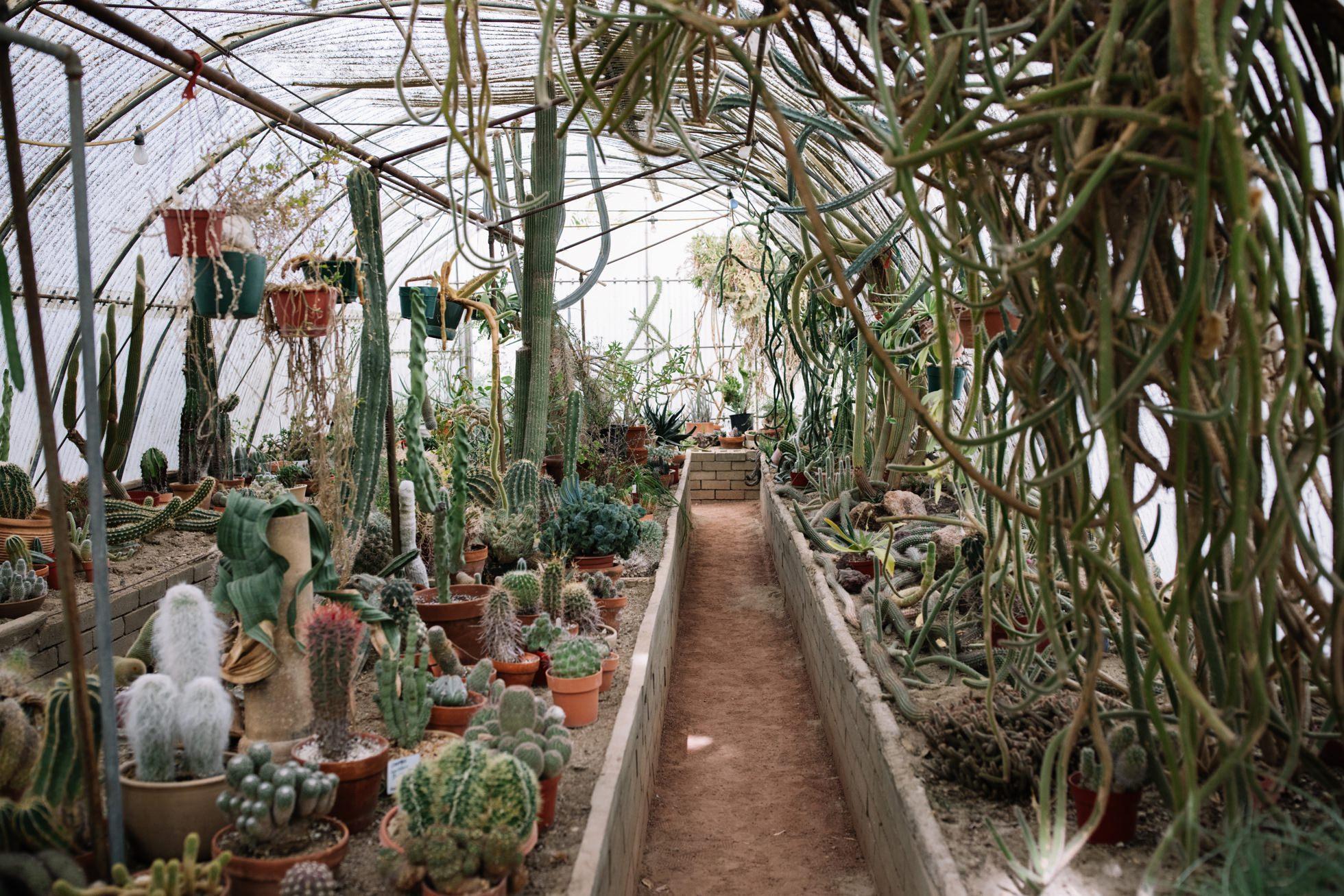 0023-palm-springs-moorten-botanical-gardens-greenhouse-wedding-ca