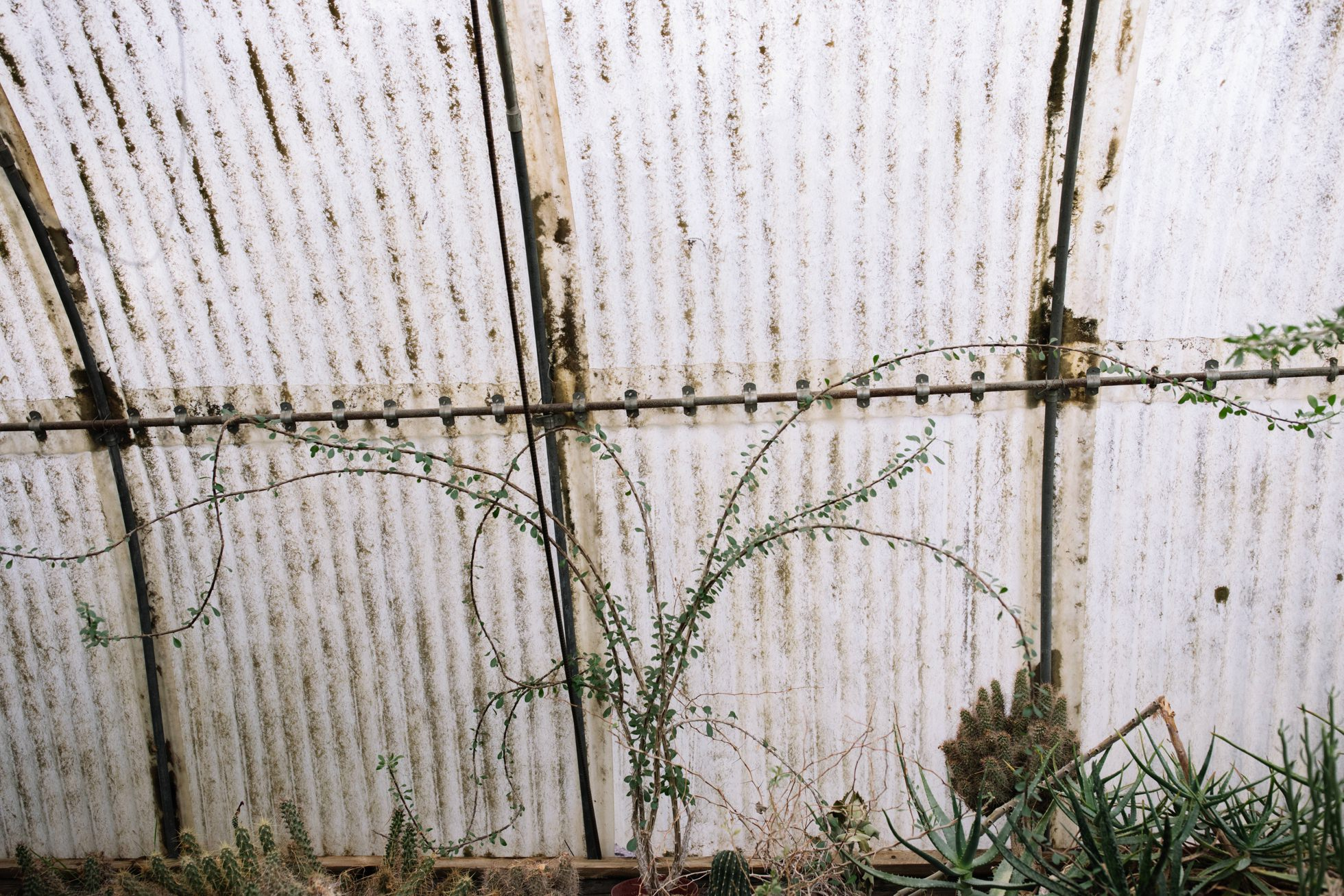 0025-palm-springs-moorten-botanical-gardens-greenhouse-wedding-ca