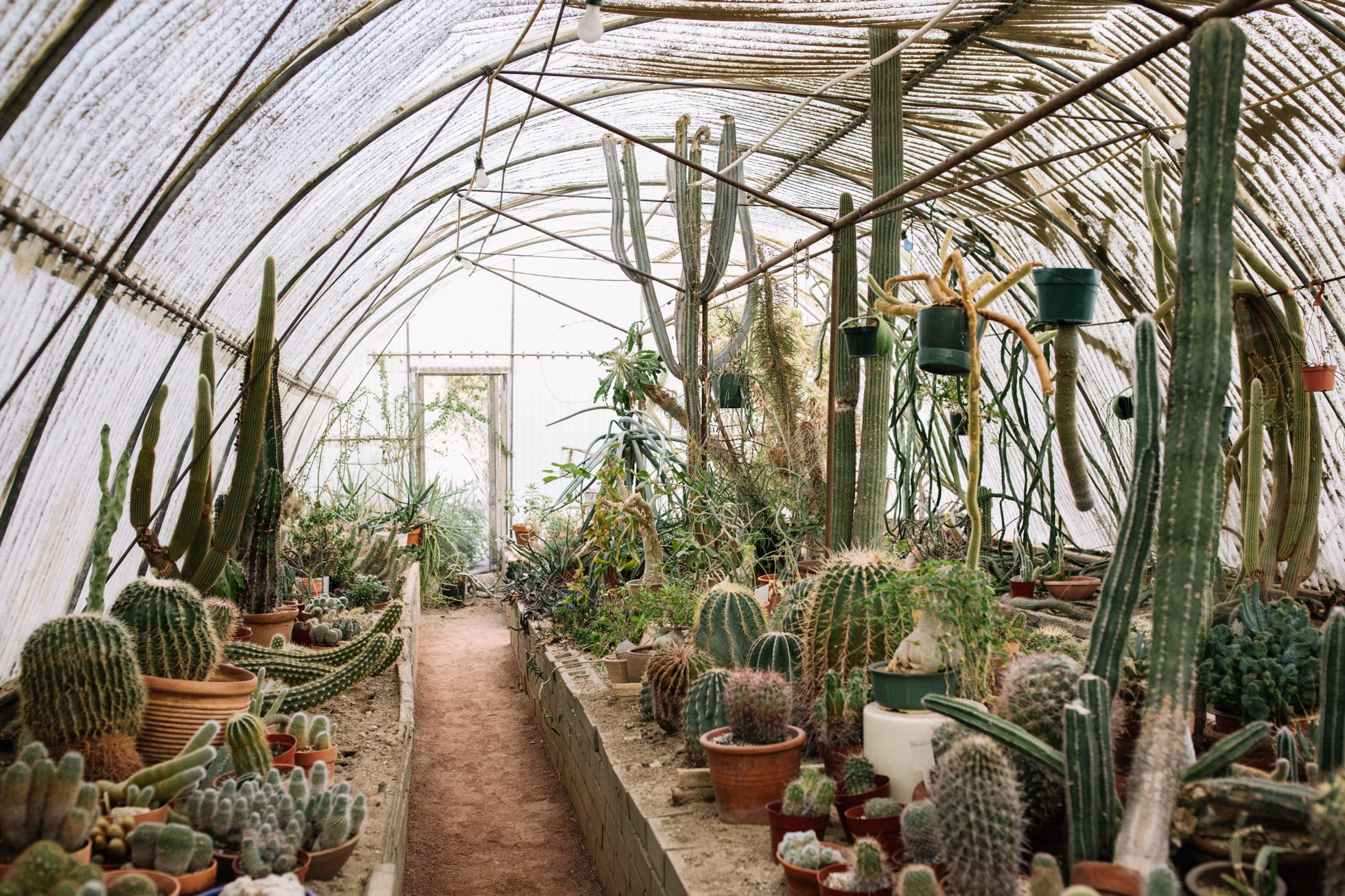 0026-palm-springs-moorten-botanical-gardens-greenhouse-wedding-ca
