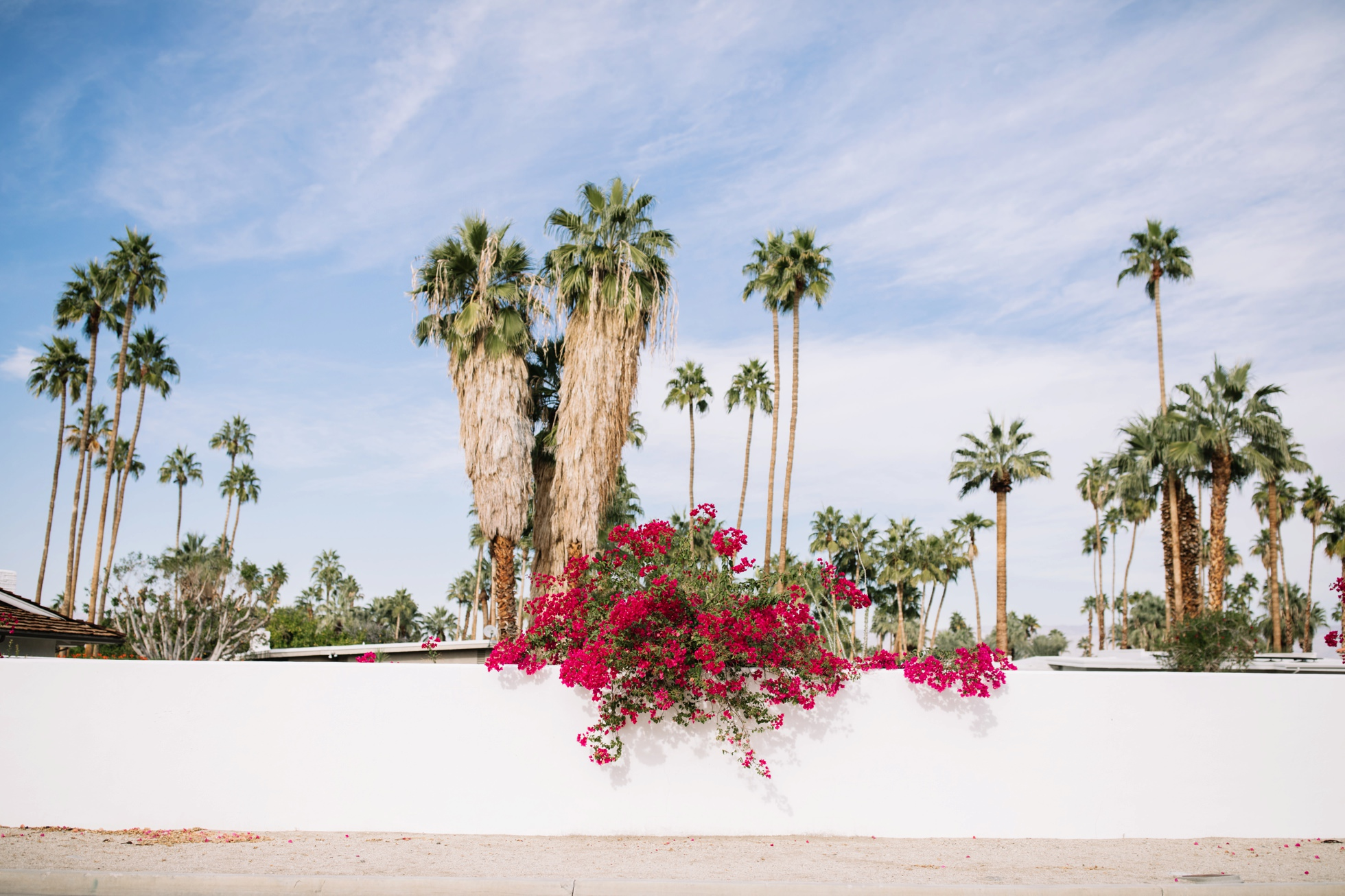 0037-palm-springs-bougainvillea-palm-trees-ca-architecture