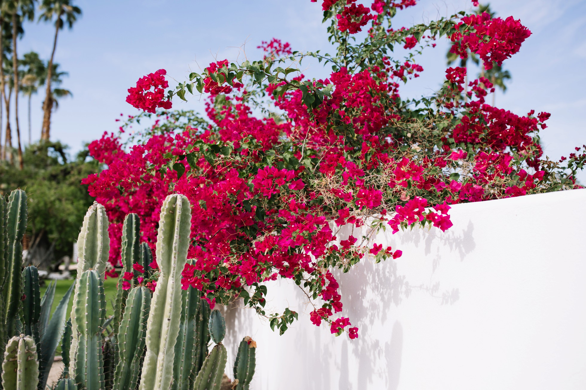 0041-palm-springs-bougainvillea-cactus-white-color-palette