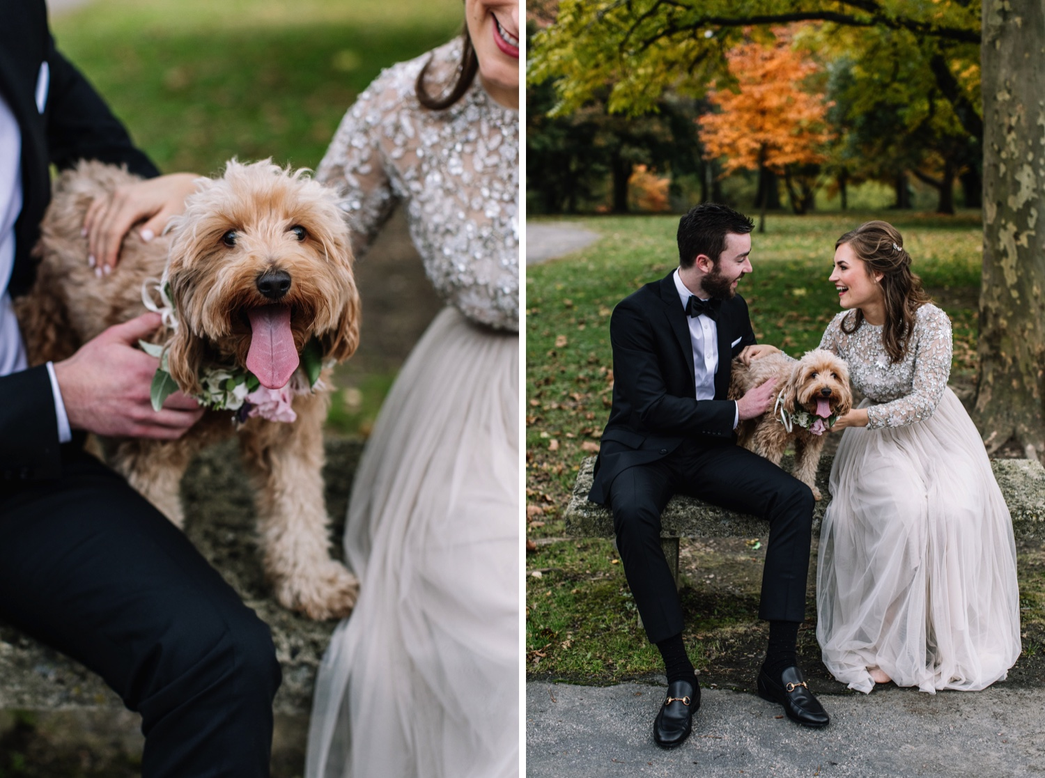 Wedding Dog Pet Portraits Philadelphia