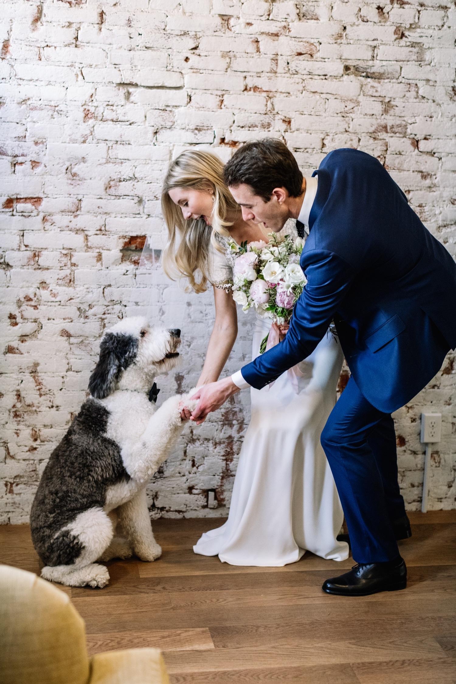 Stylish Wedding Photos with Dogs